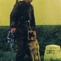 army_dog